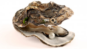 Oyster Pearl