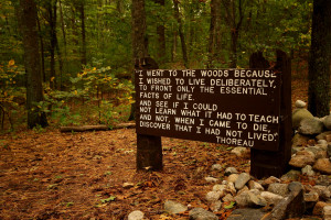 Description Thoreaus quote near his cabin site, Walden Pond.jpg