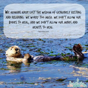 Sea Otters know how to live. Relax #quote #quotes #nature