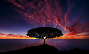 Awesome photo of sunset behind the tree