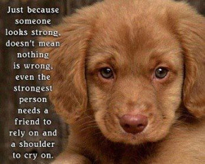 Cute Puppies With Sayings Cute puppy photo