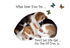 ... My Story Through My Quotes And Poetry ... My Beagle Smiles Help Me