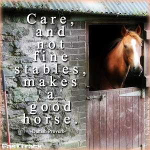 ... not fine stables, makes a good horse. -Danish Proverb #Quote #Quotes