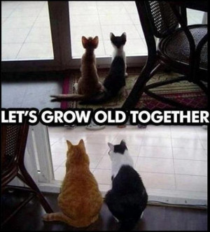 funny-cats-growing-old-together