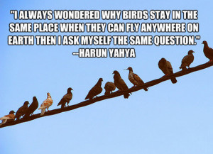 more quotes pictures under birds quotes html code for picture