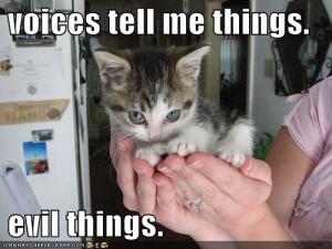 funny-pictures-evil-cute-kitten-hands.jpg#evil%20kitten