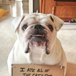 daa-small-Bad-bulldog.jpg