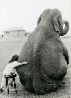 girl-hugging-elephant.jpg#ELEPHANTS%20BIG%20HUGS%20ANIMATED%20468x650