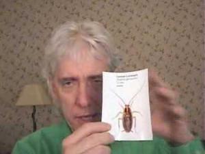 Homemade Roach Traps