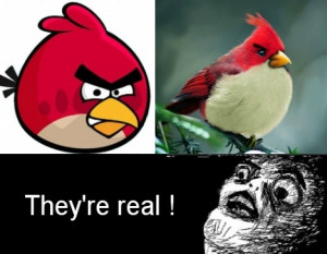... most funny Angry birds memes and Jokes .. . #Hilarious #Funny #Jokes