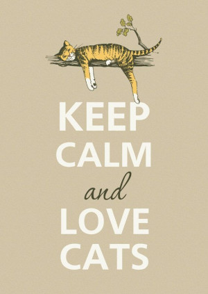 ... Cats, Cats Love Quotes, Keep Calm Quotes Animals, Keep Calm And Love