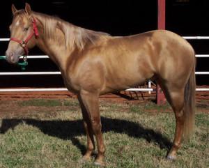 Discuss Chestnut X Chestnut = ?? at the Horse Breeding forum - Horse ...