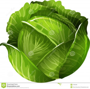 Cabbage Royalty Free Stock Photo - Image: 21894205