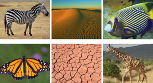 20 Patterns in Nature part four