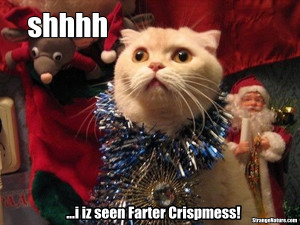 the latest funny hd wallpapers choose the best funny hd photo for your ...