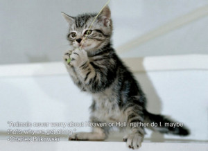 ... Quotes About Life » The Pictureof The Cute Cat Standing In The Floor