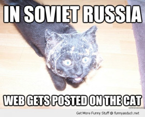 soviet russia cat spider web animal funny pics pictures pic picture ...