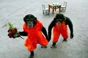 Funny Animals Couples | Photos 2012