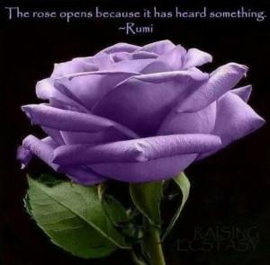 Purple rose n quote
