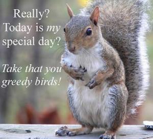 Funny Squirrel (36)
