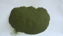 supply Taiwan Strait lettuce powder ulva powder,chicken feed,pig feed ...