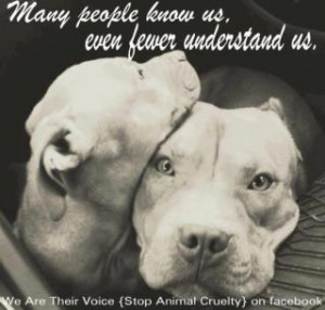 Pitbulls deserve better.