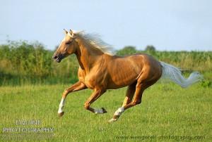 Palomino horse runningGolden Hors, Dreams Horses, Beautiful Horses ღ ...
