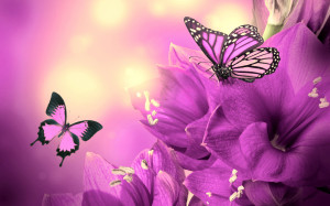 Purple Flowers Butterflies HD Wallpapers