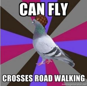 Stupid pigeons.