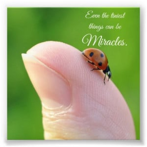 Ladybug Tiny Miracles Quote Square Photo Print