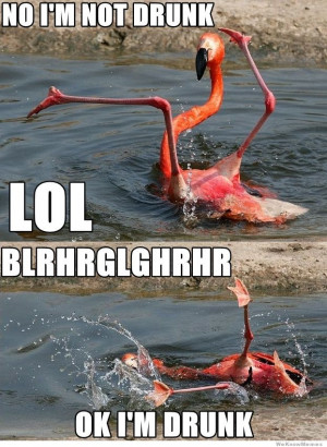 Drunk Flamingo – No I'm not drunk LOL Blrhrglghrhr Ok I'm Drunk