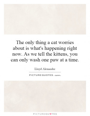 ... tell the kittens, you can only wash one paw at a time. Picture Quote