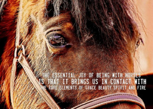 Horses help us be cooperative.