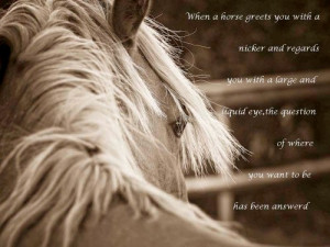 ... horse quotes horse jumping quotes horse quotes horse quotes 2014 horse