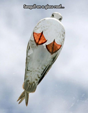 funny-seagull-on-glass-roof-sky