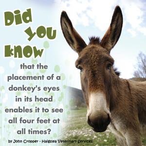 Donkey wisdom & quotes