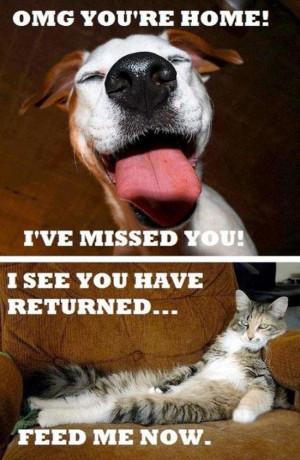 Cat vs. Dogs
