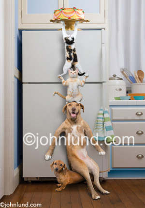 Funny animal stock pictures of cats and dogs teaming up to steal a ...