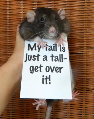 rats ratties rat facts cute rats rat protest