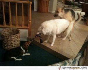 Funny German Shepherd Quotes Smart_german_shepherd_dog_ ...