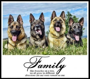 quote, family, dog, german shepard,