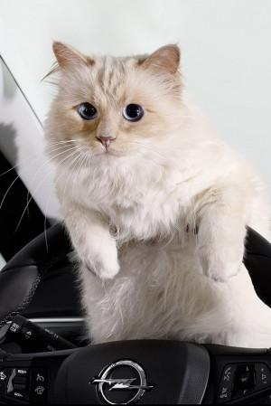 Karl Lagerfelds kat Choupette ster in Opel autoreclame