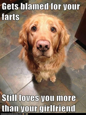 golden retriever gets blamed for farts