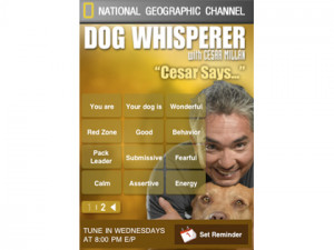 carry cesar millan quotes in your pocket