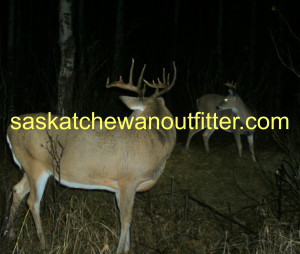 Related Pictures whitetail deer hunting deer hunting quotes