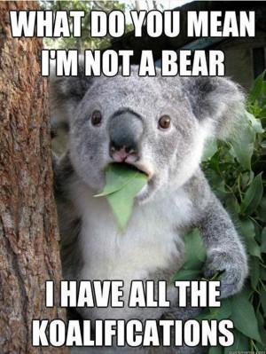 koala funny bear