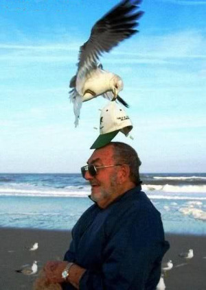 funny man and seagull moment funny man and seagull moment