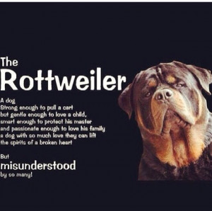 RottweilerPuppies, Doggie Galore, Things Rottie, So True, Rottweilers ...
