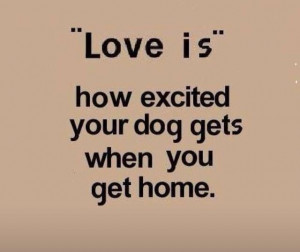 Pure unabashed joy.: Doggie, Dogs Quotes, The Doors, Pet, Love Is ...