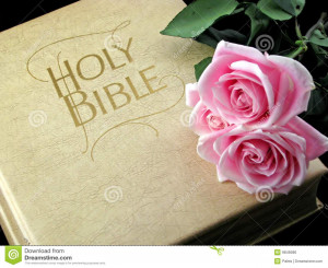 Royalty Free Stock Image: Pink roses on holy bible